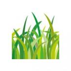 簡単に草原のイラストが描けるイラレ・パターンブラシ